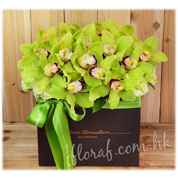 鮮花花盒 - 荷蘭綠色蕙蘭